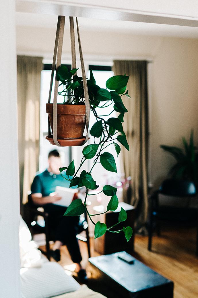 室内 観葉植物 吊り下げ
