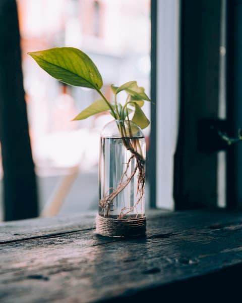 plants_01